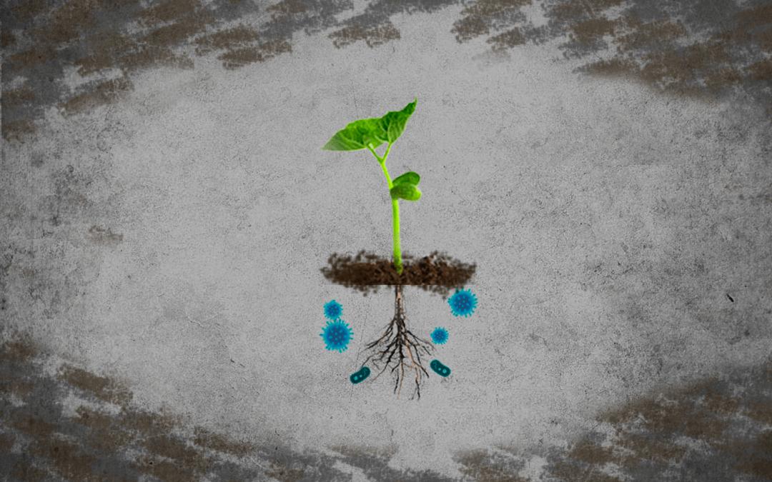 Aumento de patógenos en el suelo por crisis climáticas