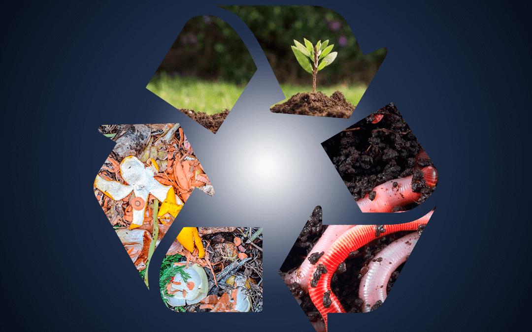 ¿Vermicompostaje o compostaje? Una guía práctica para reciclar