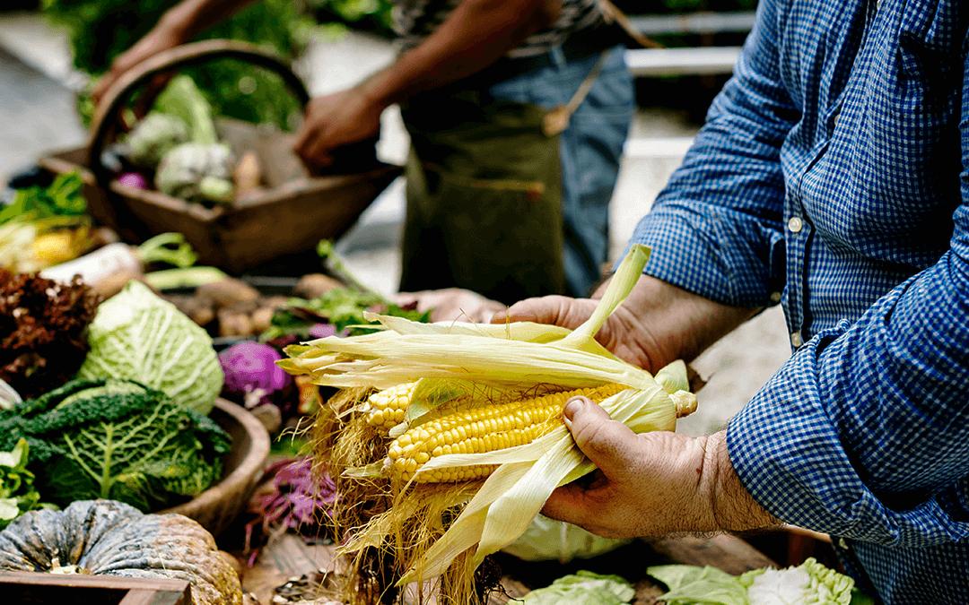 Sin agroecología no puede haber soberanía alimentaria.