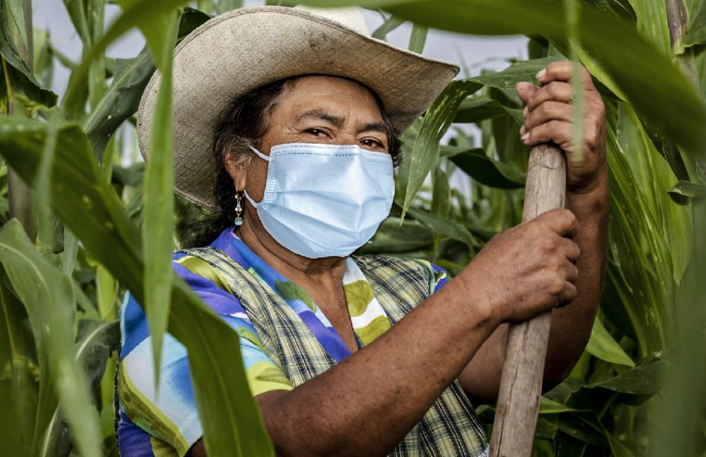 ANAFAE + soberanía alimentaria Honduras.