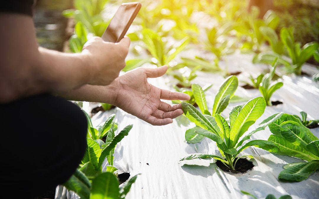 Agroganadería 4.0: ¿una política de Estado?