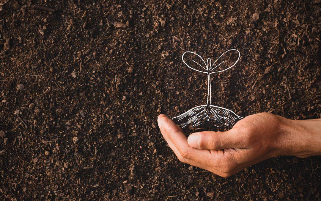 Guardianes de semillas, territorios y oportunidades