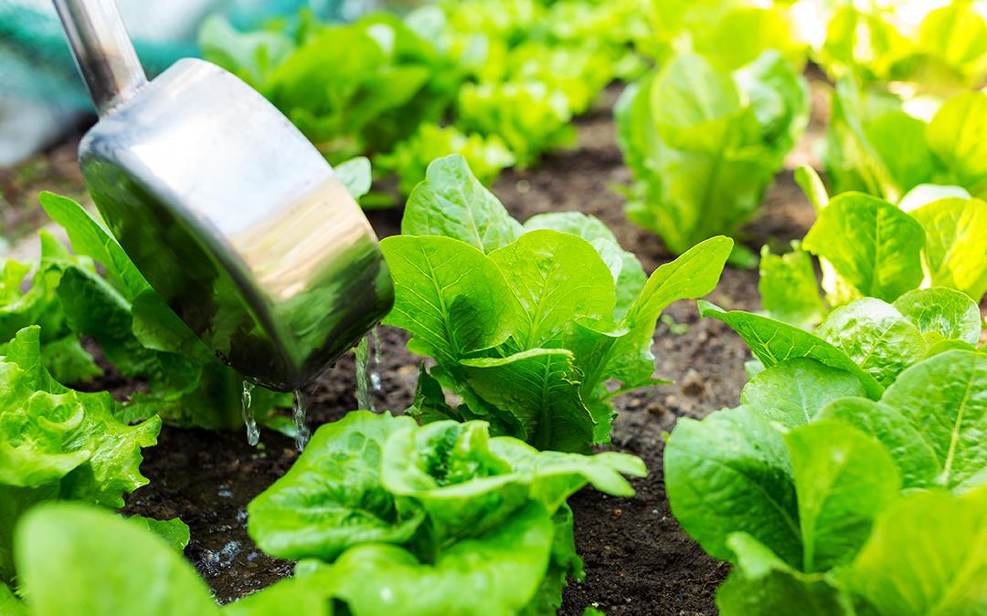 El uso de fertilizantes, una amenaza creciente