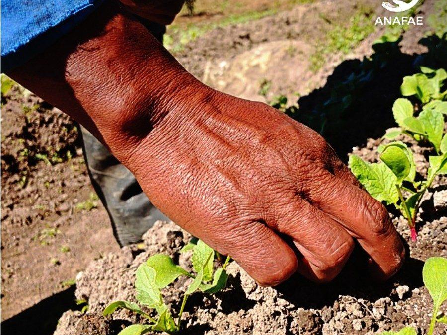 Por la Vida, Por la Soberanía Alimentaria