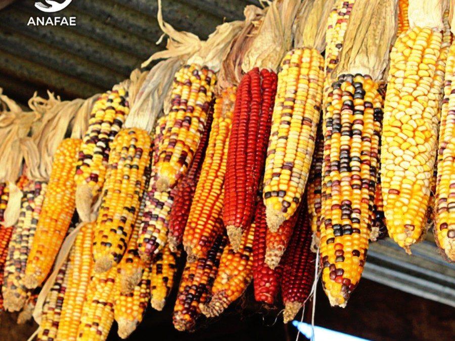 Las multinacionales semilleras quieren apropiarse de las semillas.